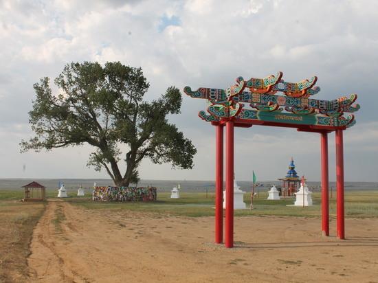 Жители Калмыкии предлагают реальный план действий по спасению Одинокого тополя
